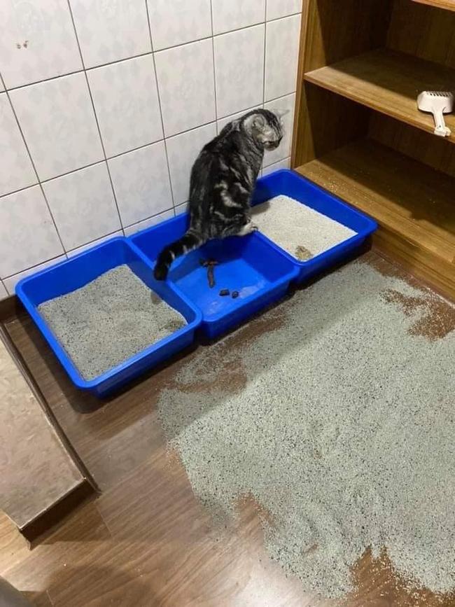 """Tận cùng của bất lực là đây: Mua chậu, đổ cát đầy đủ nhưng chú mèo vẫn chọn """"giải quyết nỗi buồn"""" theo cách """"sen"""" nhìn mà tức! - Ảnh 5."""
