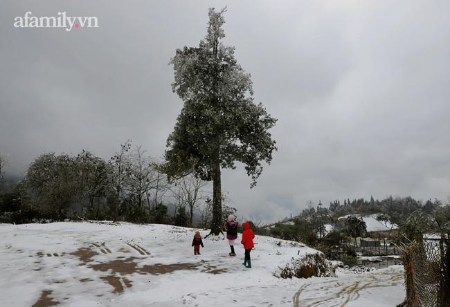 Sững sờ trước khung cảnh tuyết rơi phủ trắng đỉnh đồi Y Tý, du khách thích thú check in giữa trời trắng xóa - Ảnh 6.