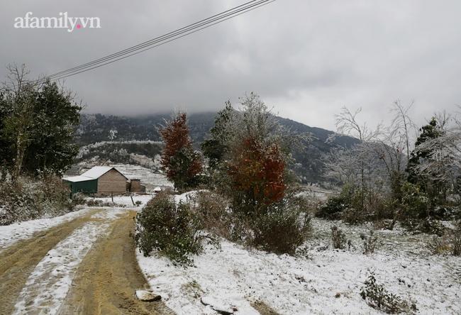 Sững sờ trước khung cảnh tuyết rơi phủ trắng đỉnh đồi Y Tý, du khách thích thú check in giữa trời trắng xóa - Ảnh 3.