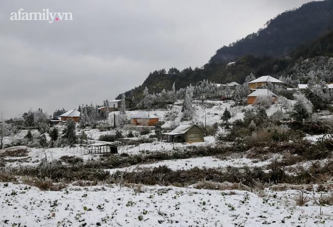 Sững sờ trước khung cảnh tuyết rơi phủ trắng đỉnh đồi Y Tý, du khách thích thú check in giữa trời trắng xóa - Ảnh 2.