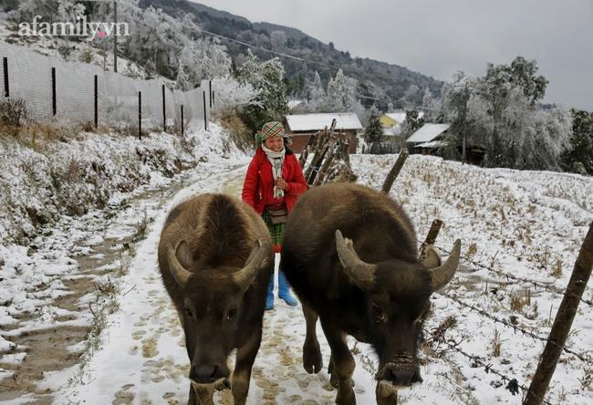 Sững sờ trước khung cảnh tuyết rơi phủ trắng đỉnh đồi Y Tý, du khách thích thú check in giữa trời trắng xóa - Ảnh 19.