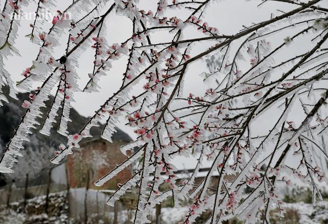 Sững sờ trước khung cảnh tuyết rơi phủ trắng đỉnh đồi Y Tý, du khách thích thú check in giữa trời trắng xóa - Ảnh 9.