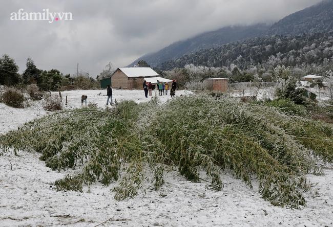 Sững sờ trước khung cảnh tuyết rơi phủ trắng đỉnh đồi Y Tý, du khách thích thú check in giữa trời trắng xóa - Ảnh 4.