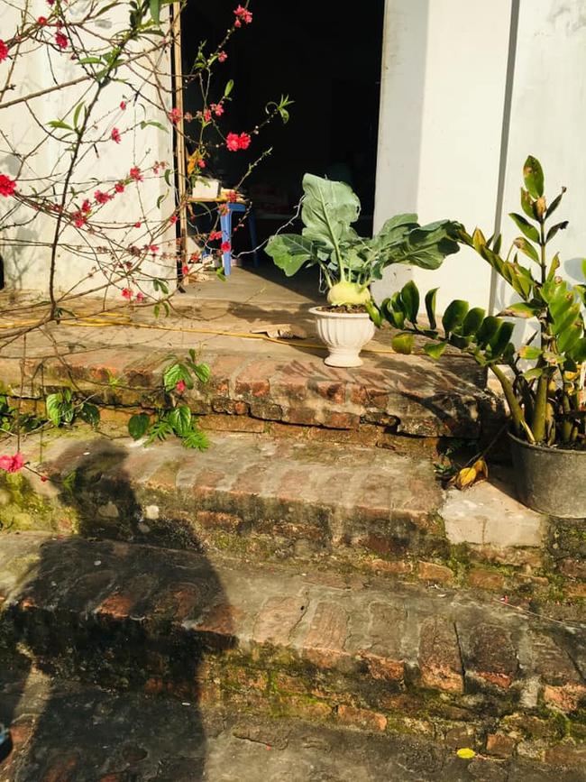 """Chán đào, quất ngày Tết, dân mạng """"đổi gió"""" sang chơi loạt cây bonsai chất lừ: Củ cải khổng lồ nở hoa tím biếc, táo lùn """"pha-ke"""" chi chít quả đỏ - Ảnh 8."""