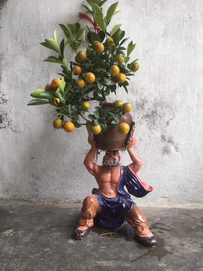 """Chán đào, quất ngày Tết, dân mạng """"đổi gió"""" sang chơi loạt cây bonsai chất lừ: Củ cải khổng lồ nở hoa tím biếc, táo lùn """"pha-ke"""" chi chít quả đỏ - Ảnh 10."""