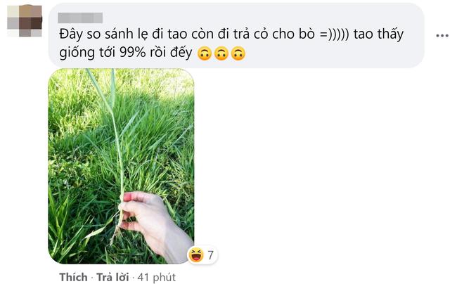 Góc hết hồn: Thanh niên đi siêu thị ở Hàn bỗng phát hiện loại cây cho trâu bò được bày bán, nhưng giá lại càng bất ngờ - Ảnh 3.