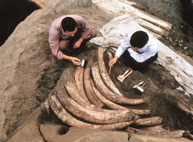 """Tìm thấy 1000 ngà voi cổ đại trong lòng đất nhưng đang khai quật thì chuyên gia đột nhiên hét lớn """"Chôn xuống ngay"""", nguyên do khiến ai cũng há hốc"""