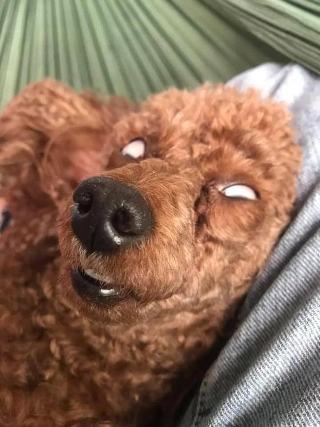 Chó cưng khoe dáng ngủ bá đạo, mắt trợn ngược lộ lòng trắng dã khiến trộm nhìn thấy cũng... xách quần chạy vội - Ảnh 2.