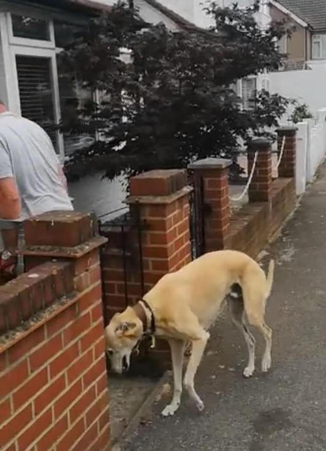 """Thấy chó cưng đi tập tễnh, con sen hốt hoảng đưa đi khám, cuối cùng mất 9 triệu viện phí và nhận về """"cục"""" tức anh ách: Boss cà khịa chút thôi! - Ảnh 2."""