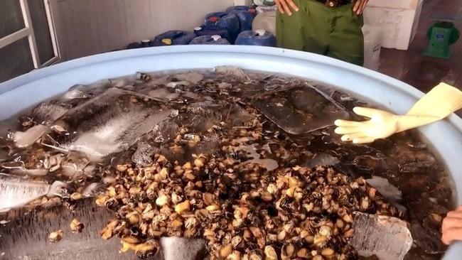 Cận Tết, thịt ốc ngâm hóa chất bị phanh phui: Chuyên gia khuyến cáo những lưu ý khi ăn ốc cuối năm - Ảnh 1.