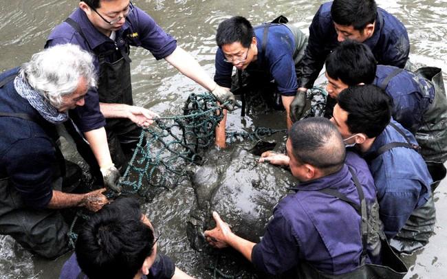 """Báo nước ngoài đưa tin về việc phát hiện thêm """"rùa Hoàn Kiếm"""" khổng lồ ở Việt Nam khi thế giới chỉ còn 1 con duy nhất - Ảnh 1."""