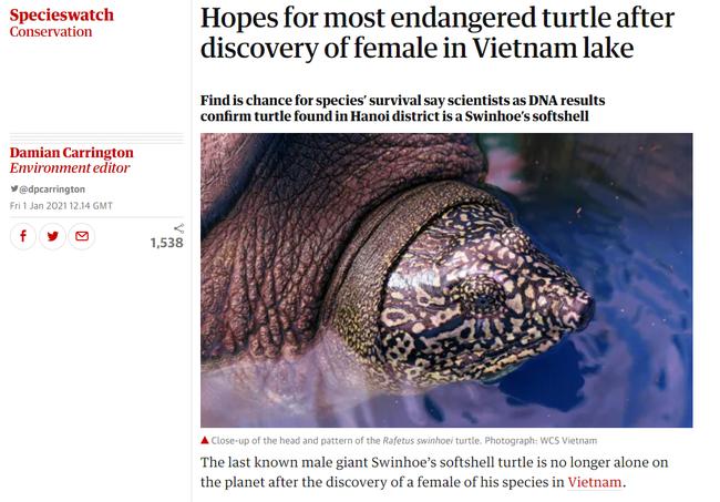 """Báo nước ngoài đưa tin về việc phát hiện thêm """"rùa Hoàn Kiếm"""" khổng lồ ở Việt Nam khi thế giới chỉ còn 1 con duy nhất - Ảnh 2."""