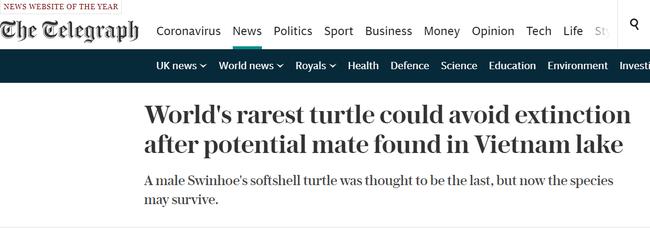 """Báo nước ngoài đưa tin về việc phát hiện thêm """"rùa Hoàn Kiếm"""" khổng lồ ở Việt Nam khi thế giới chỉ còn 1 con duy nhất - Ảnh 3."""