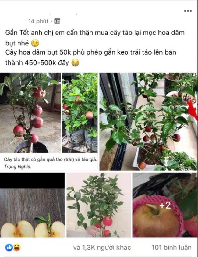 Cảnh giác những cú lừa ngoạn mục của tiểu thương ngày cận Tết: Mua táo bonsai cả nửa triệu về nhà lại nở ra hoa dâm bụt - Ảnh 2.