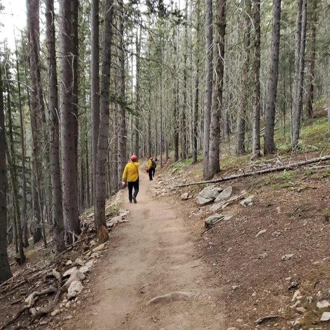 Đang leo núi thì con gái biến mất khỏi tầm mắt, bố kêu lớn để rồi nghe âm thanh kỳ lạ vọng ra từ rừng sâu trước khi loạt điều kỳ lạ diễn ra - Ảnh 2.