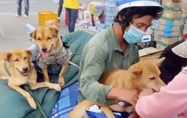 """Vụ 15 chú chó về Cà Mau bị tiêu hủy: Địa phương nhận đã """"hơi vội"""" - Ảnh 1."""