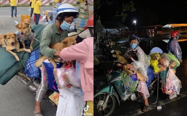 """Vụ 15 chú chó về Cà Mau bị tiêu hủy: Địa phương nhận đã """"hơi vội"""" - Ảnh 2."""