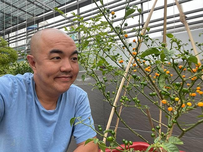 Cây ớt Peru có gì mà giá lên tới 550 triệu đồng/kg, hàng loạt sao Việt đua nhau mua về trưng Tết? - Ảnh 3.