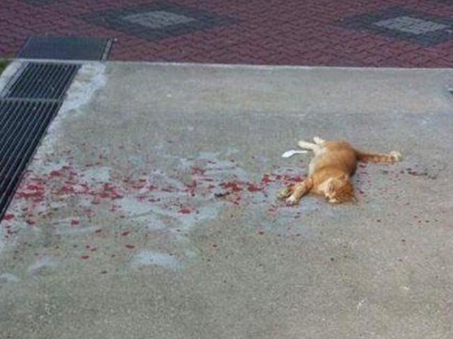 Thấy con mèo nằm bất động trên vũng máu, cô gái tiến lại gần liền thót tim khi chứng kiến cảnh tượng trước mắt - Ảnh 1.