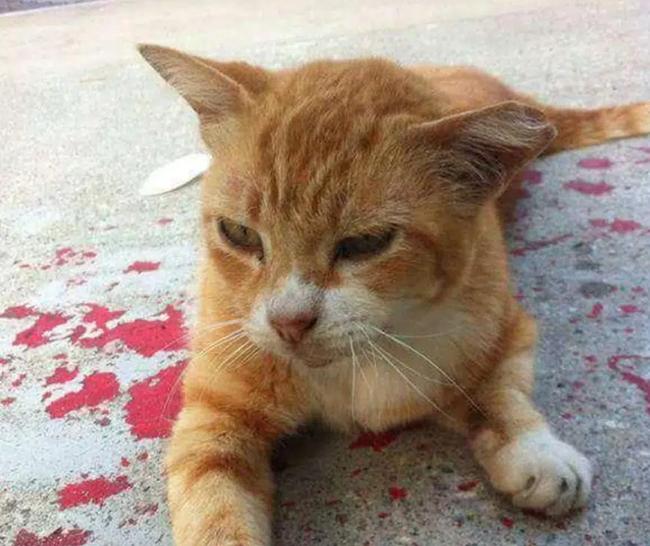 Thấy con mèo nằm bất động trên vũng máu, cô gái tiến lại gần liền thót tim khi chứng kiến cảnh tượng trước mắt - Ảnh 4.