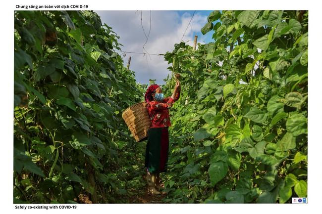 ẢNH: Các thiếu nữ Quảng Bạ vừa chống dịch vừa phát triển kinh tế - Ảnh 6.