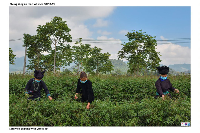 ẢNH: Các thiếu nữ Quảng Bạ vừa chống dịch vừa phát triển kinh tế - Ảnh 7.