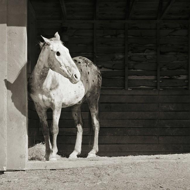 """Chùm ảnh """"những con vật được cho phép sống đến già"""" gây cảm giác ám ảnh lạ kỳ, khi những mảnh đời ngắn ngủi được """"ban tặng"""" sự sống buồn tủi - Ảnh 1."""