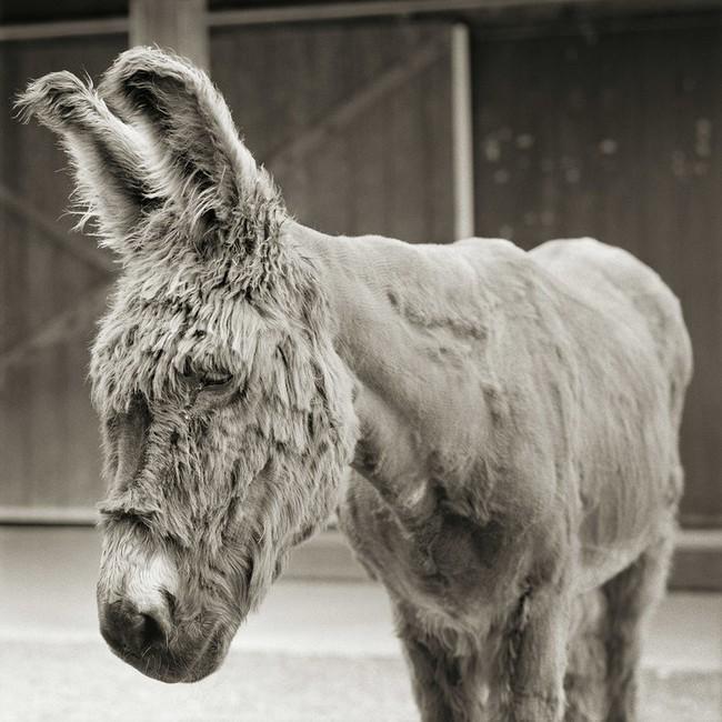"""Chùm ảnh """"những con vật được cho phép sống đến già"""" gây cảm giác ám ảnh lạ kỳ, khi những mảnh đời ngắn ngủi được """"ban tặng"""" sự sống buồn tủi - Ảnh 2."""