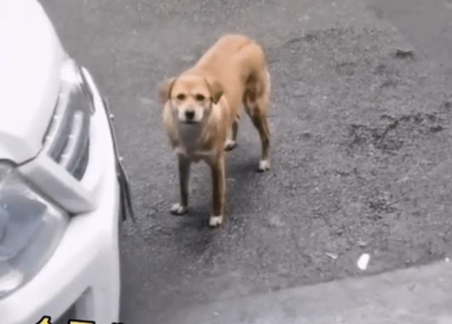 """""""Ôm hận"""" sau khi bị triệt sản, chú chó gây xôn xao vì ngày nào cũng đến """"mắng chửi"""" phòng khám thú y suốt 3 tháng qua - Ảnh 1."""