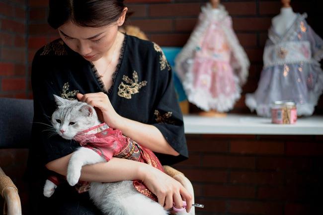 """Đây là thời đại của """"Giáo phái Mèo"""", không ít người bằng lòng trở thành """"nô lệ mèo"""" và sự thật đằng sau tâm lý này - Ảnh 2."""