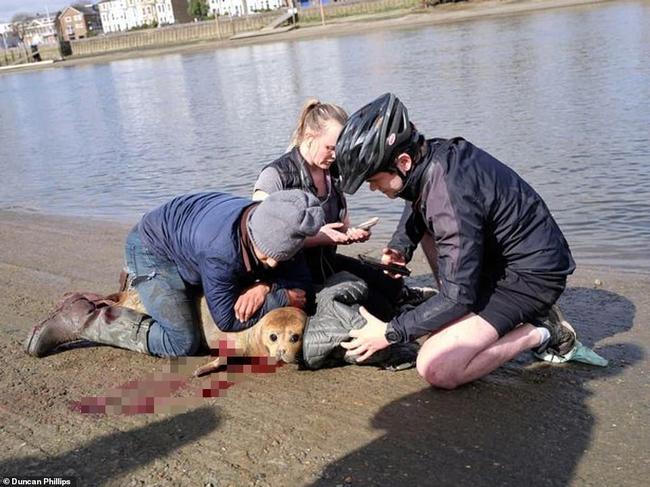 """Cái chết của chú hải cẩu 9 tháng tuổi khiến nước Anh thương tiếc: Bị chó dữ """"nhà giàu"""" tấn công dữ dội tạo nên cảnh hiện trường đẫm máu - Ảnh 4."""
