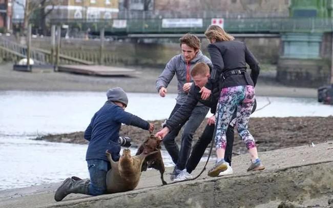 """Cái chết của chú hải cẩu 9 tháng tuổi khiến nước Anh thương tiếc: Bị chó dữ """"nhà giàu"""" tấn công dữ dội tạo nên cảnh hiện trường đẫm máu - Ảnh 3."""