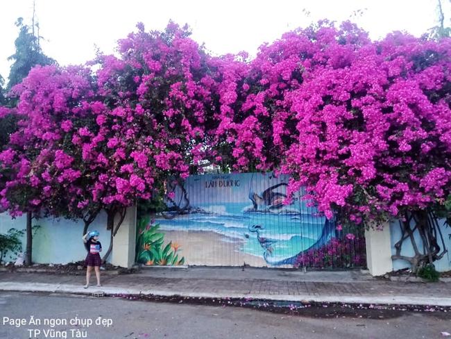 """Giàn hoa giấy khổng lồ đẹp nhất Vũng Tàu bị kẻ gian chặt gốc, cư dân mạng xót xa chia sẻ hình ảnh gốc cây """"lửng lơ"""" bên vệ đường - Ảnh 1."""