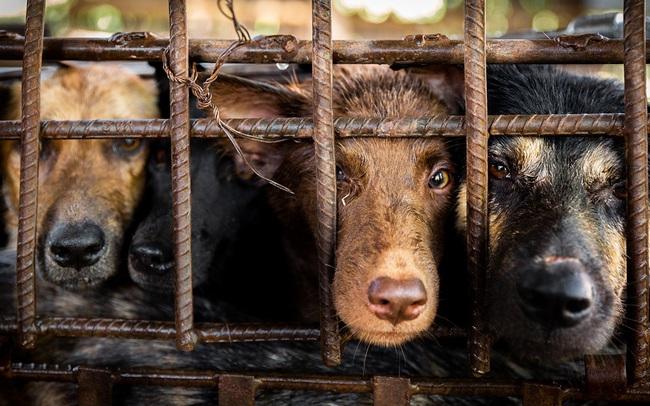 Từ tháng 4/2021, xử phạt nặng hành vi đánh đập, hành hạ vật nuôi - Ảnh 1.