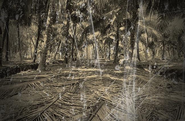"""Kỳ án """"vòng cẩm thạch"""" chấn động những năm 80: Cánh tay người lẫn trong đống lá và hố chôn xác tập thể giữa rừng dừa nước (KỲ 1) - Ảnh 2."""