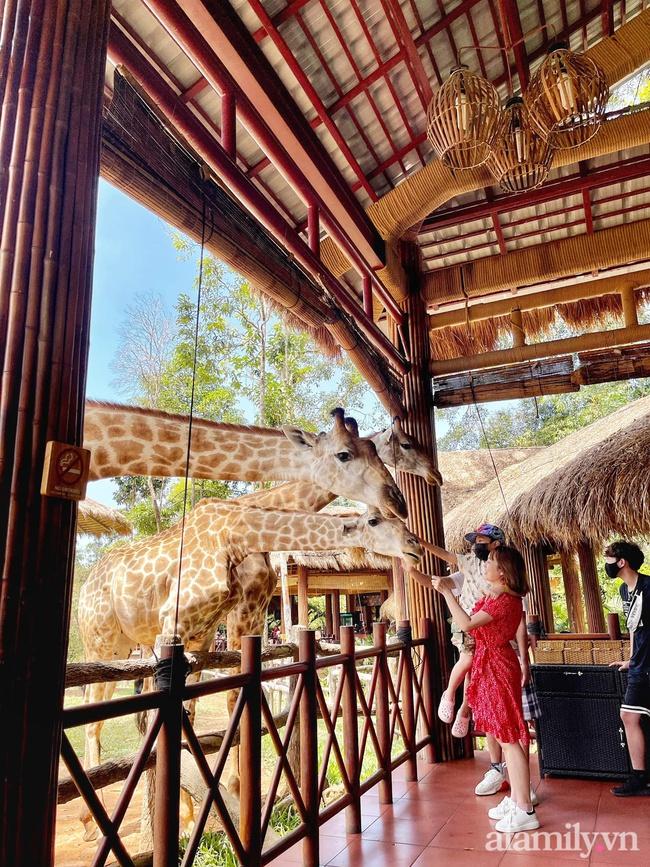 """Mẹ Hà Nội kể hành trình đưa 2 con đi chơi tại Safari Phú Quốc, kết luận một câu: """"Ai đang phân vân thì chốt luôn cho nhanh"""" - Ảnh 15."""
