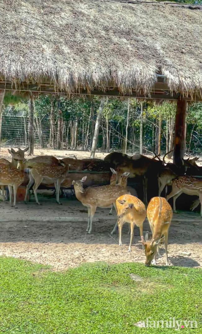 """Mẹ Hà Nội kể hành trình đưa 2 con đi chơi tại Safari Phú Quốc, kết luận một câu: """"Ai đang phân vân thì chốt luôn cho nhanh"""" - Ảnh 13."""