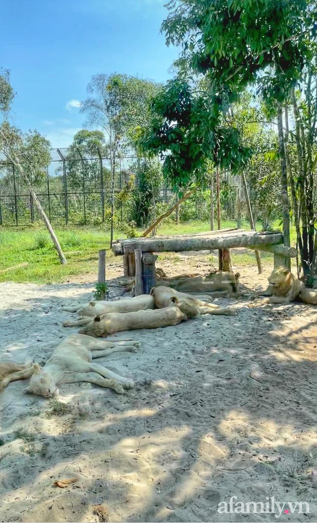 """Mẹ Hà Nội kể hành trình đưa 2 con đi chơi tại Safari Phú Quốc, kết luận một câu: """"Ai đang phân vân thì chốt luôn cho nhanh"""" - Ảnh 12."""