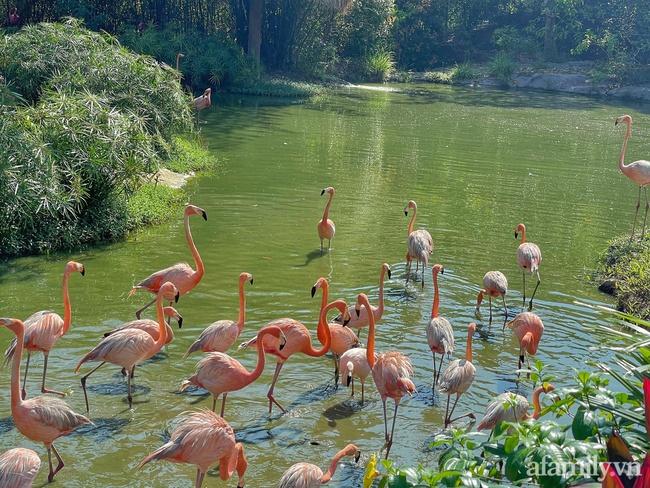 """Mẹ Hà Nội kể hành trình đưa 2 con đi chơi tại Safari Phú Quốc, kết luận một câu: """"Ai đang phân vân thì chốt luôn cho nhanh"""" - Ảnh 6."""