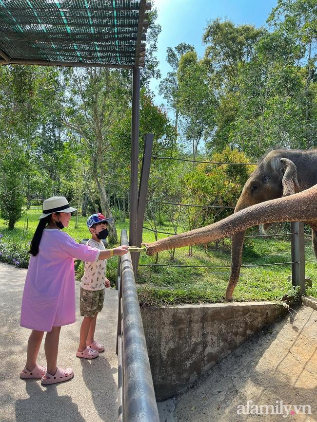"""Mẹ Hà Nội kể hành trình đưa 2 con đi chơi tại Safari Phú Quốc, kết luận một câu: """"Ai đang phân vân thì chốt luôn cho nhanh"""" - Ảnh 7."""