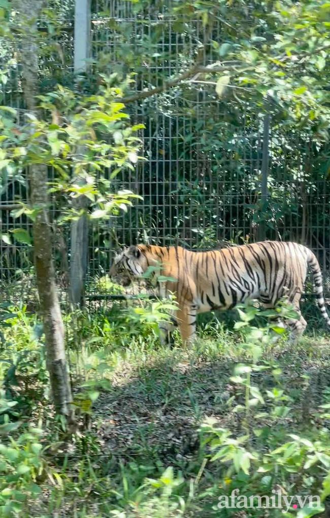 """Mẹ Hà Nội kể hành trình đưa 2 con đi chơi tại Safari Phú Quốc, kết luận một câu: """"Ai đang phân vân thì chốt luôn cho nhanh"""" - Ảnh 11."""