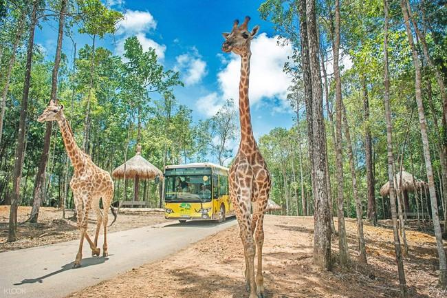 """Mẹ Hà Nội kể hành trình đưa 2 con đi chơi tại Safari Phú Quốc, kết luận một câu: """"Ai đang phân vân thì chốt luôn cho nhanh"""" - Ảnh 10."""