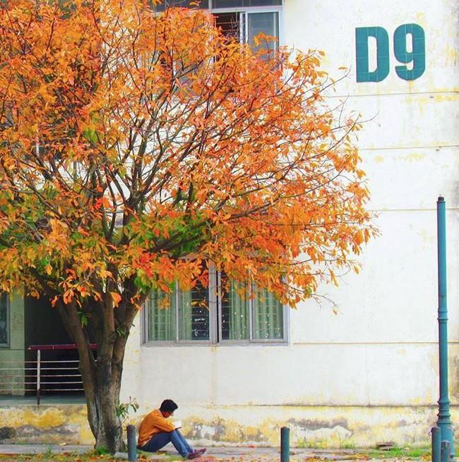 Đại học danh giá bậc nhất Hà Nội, đẹp như phim Trái tim mùa thu: Học sinh nếu 3 môn không đạt từ 9 điểm trở lên thì đừng liều đăng ký - Ảnh 11.