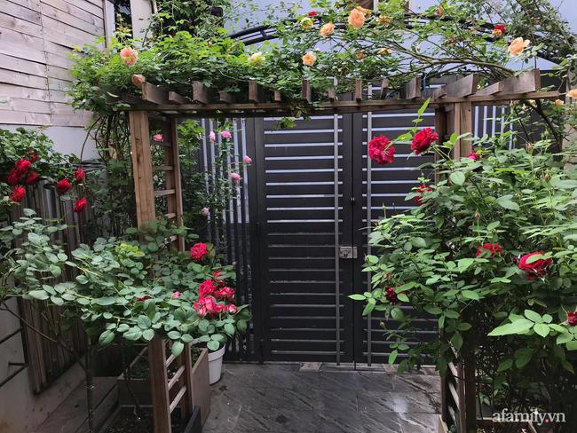 Vườn hồng rực rỡ tỏa sắc hương trước sân nhà đón hè sang của cặp vợ chồng trẻ Sải Gòn - Ảnh 1.