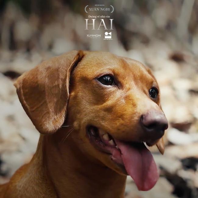 Xuân Nghị chơi lớn đưa cún cưng lên phim - Ảnh 1.