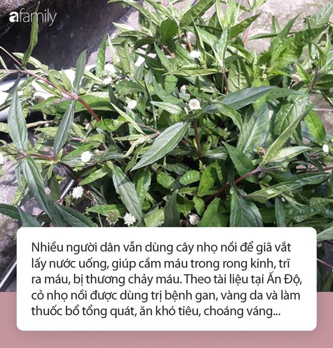 Hàng loạt các bệnh liên quan đến máu có thể trị dứt điểm bằng thứ cỏ dại mọc bờ mọc bụi ở làng quê Việt - Ảnh 4.