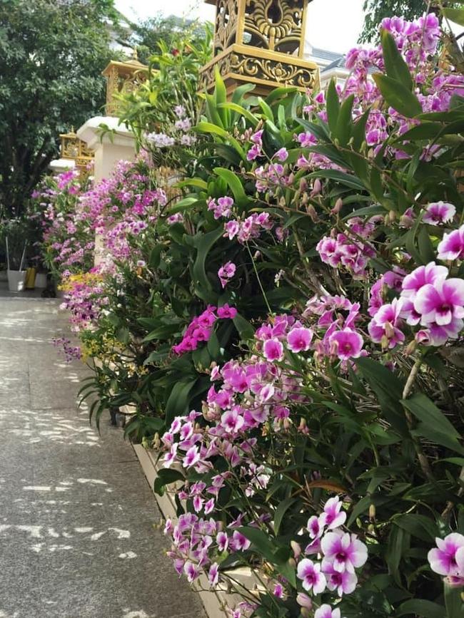 khoe gia đình có hàng rào hoa lan siêu đẹp - Ảnh 1.