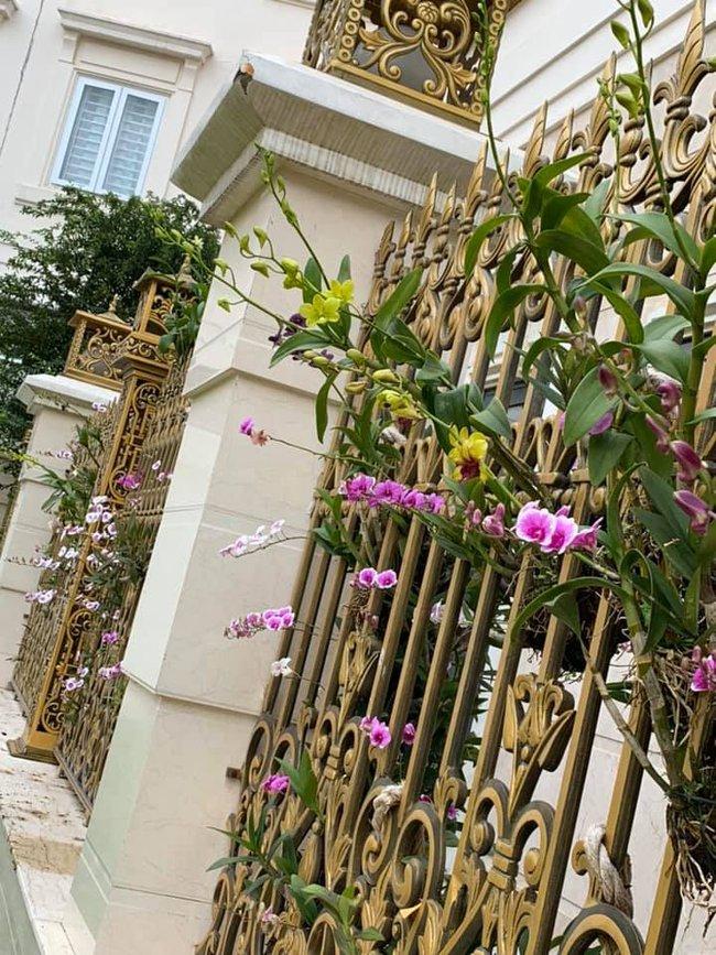khoe gia đình có hàng rào hoa lan siêu đẹp - Ảnh 2.