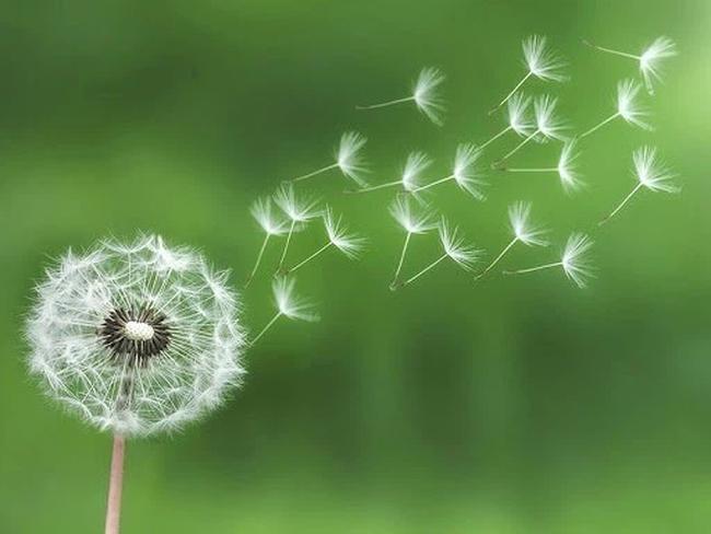 Được học sinh làm văn ví von như bông hoa, cô giáo đang vui sướng thì cạn lời khi biết tên loài hoa: Chỉ muốn cho 0 điểm để bõ tức - Ảnh 2.