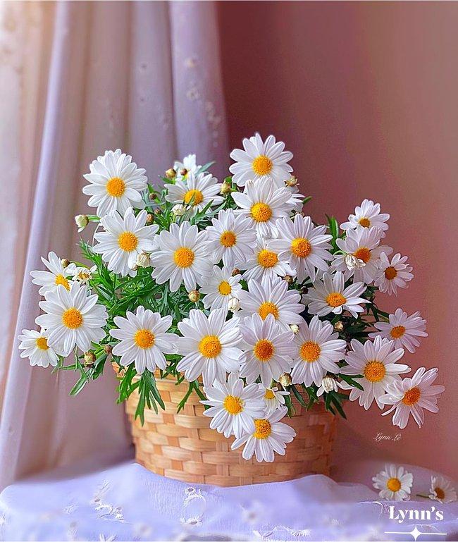 """Bị """"hớp hồn"""" bởi màu trắng tinh khôi của cúc dại, vợ đảm tại Úc thử tài với 1001 cách cắm hoa, tô điểm cho phòng khách trở nên thơ mộng lãng mạn - Ảnh 1."""